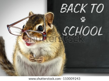 Funny chipmunk in glasses, back to school concept - stock photo