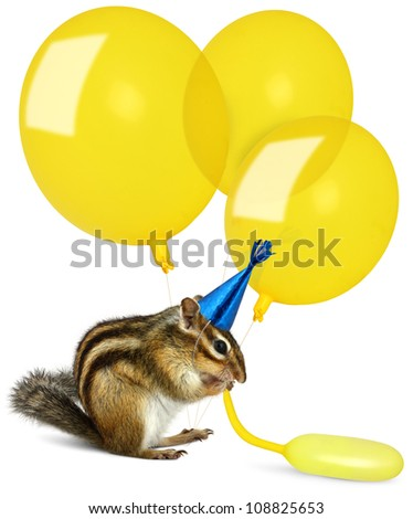 Funny chipmunk inflating yellow balloons, wearing birthday hat - stock photo