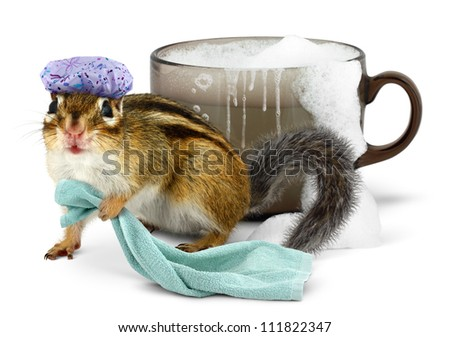 Funny chipmunk taking a bath in cup - stock photo