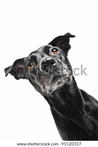 Funny closeup of a cute mutt waiting for a treat - stock photo