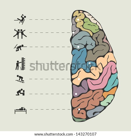 Funny concept of human brain.  Raster version - stock photo