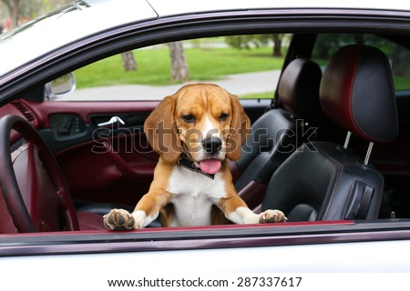Funny cute dog in car - stock photo