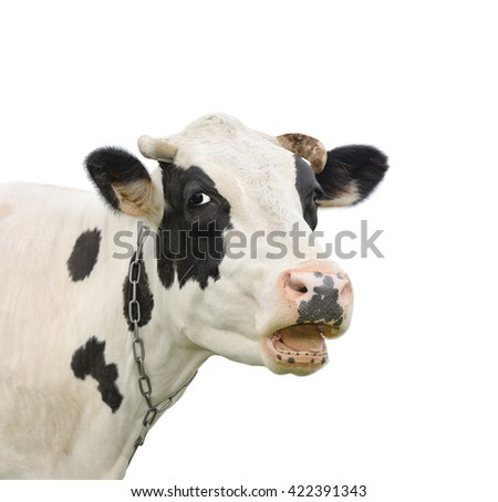 Funny cute talking cow isolated on white/Cow/Cow isolated on white - stock photo