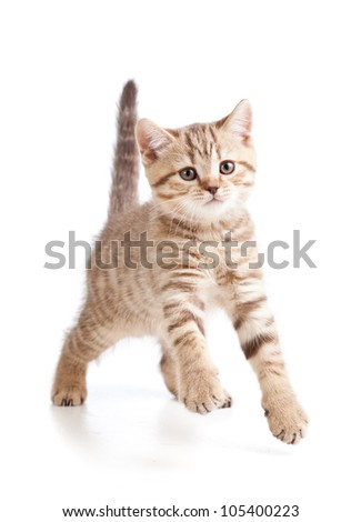 funny cute young cat  isolated on white background - stock photo