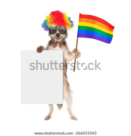 Funny dog dressed for a gay pride parade wearing a rainbow color wig and sunglasses while holding a flag and blank white sign - stock photo