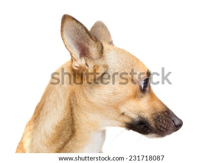funny dog muzzle on white background isolated - stock photo