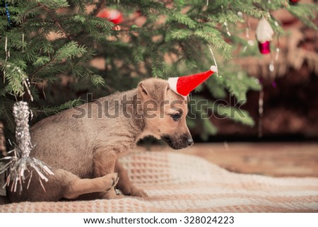funny dog on background Christmas tree - stock photo