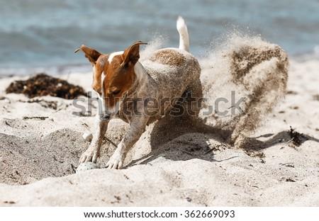 Funny dog on the beach - stock photo