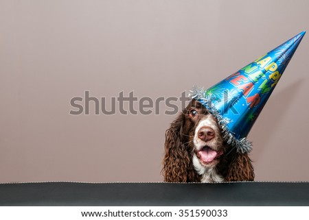 funny dog wearing a new year's party hat - stock photo