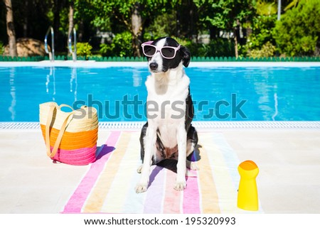 Funny dog wearing sunglasses on summer vacation at swimming pool. - stock photo