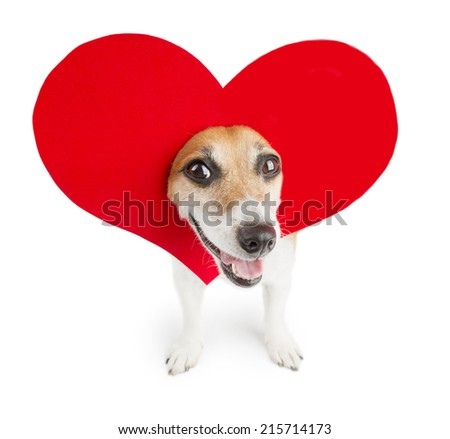 Funny dog with bright beautiful red heart on his head. romantic joke  - stock photo