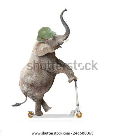 Funny elephant with protective helmet push scooter. Safety and insurance concept.  - stock photo