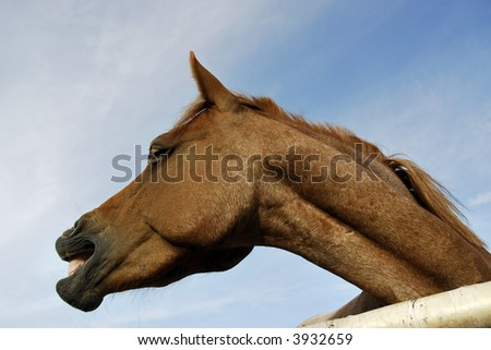 Funny face from a funny horse - stock photo