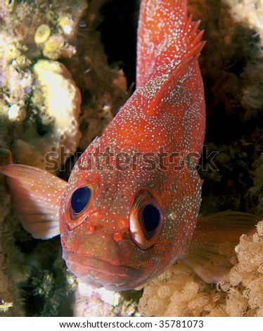 funny faced fish - stock photo