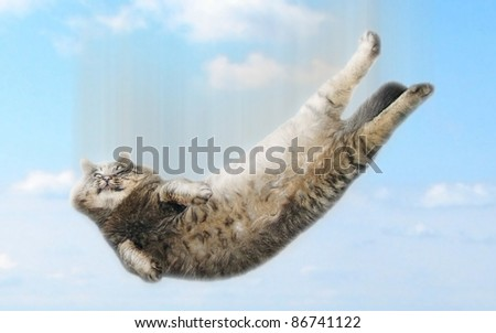 Funny falling cat - stock photo