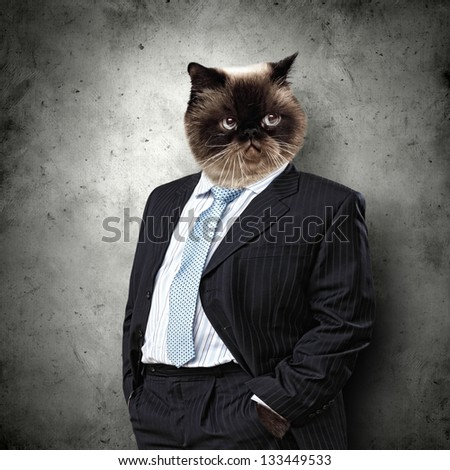 Funny fluffy cat in a business suit businessman. collage - stock photo