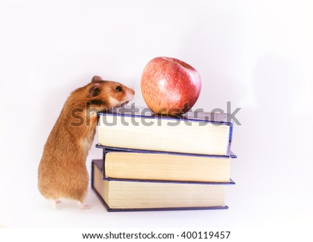 Funny ginger hamster Red hamster, apple and books  isolated on white background - stock photo