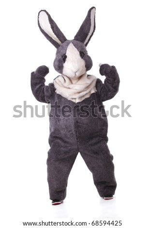 Funny grey rabbit showing his biceps isolated on white background - stock photo