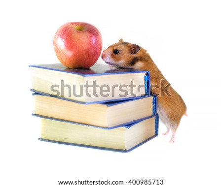 Funny hamster, apple and books  isolated on white background - stock photo