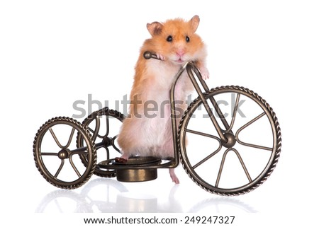 funny hamster on a bicycle - stock photo