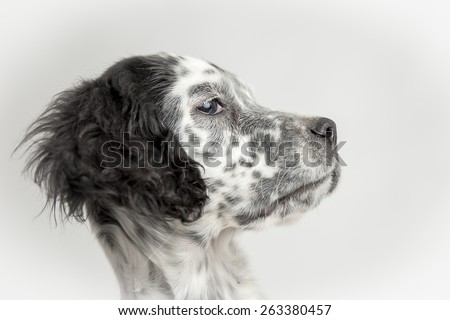 Funny head profile portrait of puppy dog. White background - stock photo