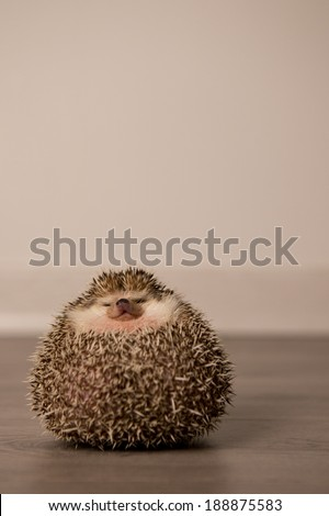Funny hedgehog - stock photo