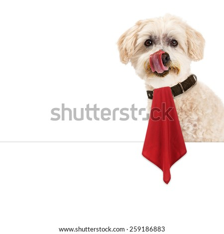 Funny image of a cute dog with a messy dace licking his lips while wearing a red napkin that is hanging over a blank white sign - stock photo