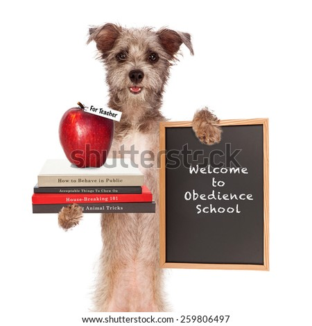 Funny image of dog holding books on animal training, an apple for teacher and sign saying welcome to obedience school - stock photo