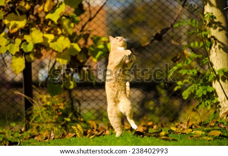 Funny jumping cat - stock photo