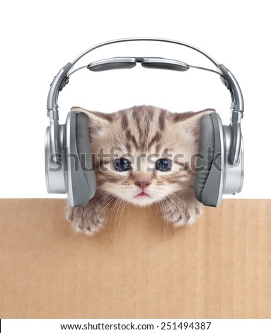 Funny kitten cat in headphones in cardboard box - stock photo