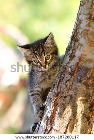Funny kitten on a tree - stock photo