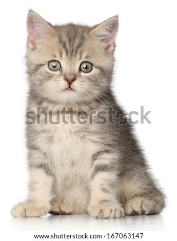 Funny kitten on a white background - stock photo