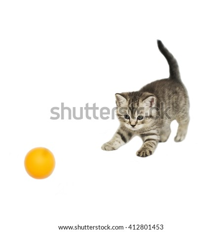 Funny kitten playing with ball on white background. Striped kitten isolated. The British tiger cat color tabby. - stock photo