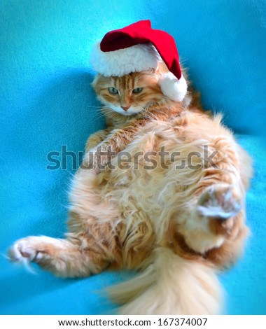 Funny lazy red cat in Santa Claus hat - stock photo