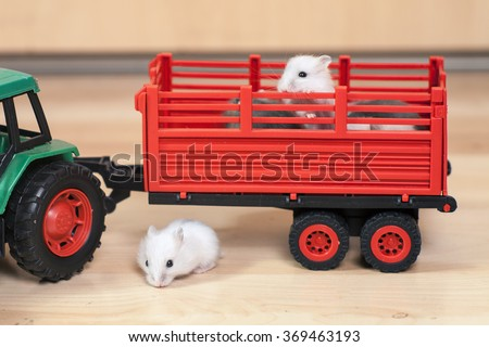 Funny little hamsters ride on toy tractor. White hamster hid under a trailer. - stock photo