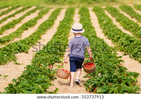 Funny little kid boy holding baskets with strawberries on organic pick a berry farm in summer, on warm sunny day. Harvest fields. Healthy food for children. Gardening and farming concept - stock photo