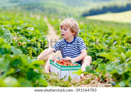 Funny little kid boy picking and eating strawberries on organic bio berry farm in summer, on warm sunny day. Harvest fields in Germany. Healthy food for children. - stock photo