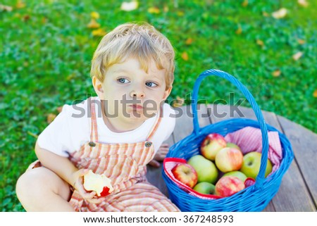 Funny little kid boy with big blue basket picking and eating red apples in fruit orchard, outdoors. Child having fun with gardening and harvesting. Lifestyle, organic food, family concept. - stock photo