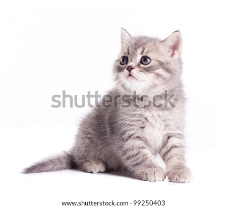 funny little kitten isolated on white background - stock photo