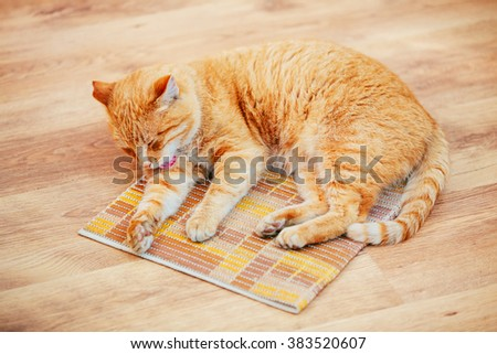 Funny Lovely Red Cat Kitten Lick Washes Itself On Laminate Floor at Home. - stock photo