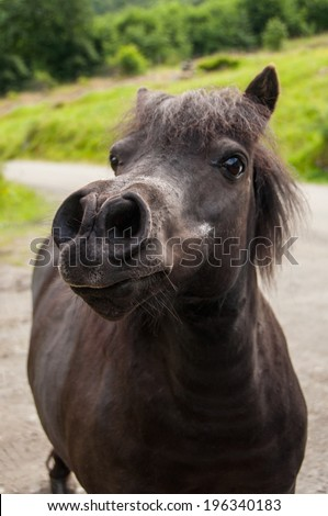 funny muzzle of pony, close-up, selective focus - stock photo