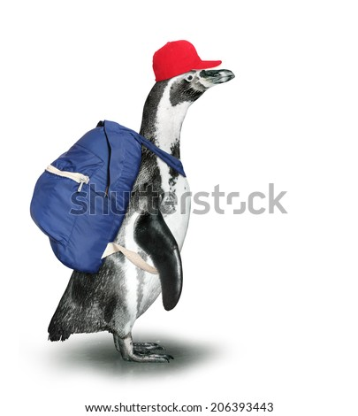 Funny penguin with backpack and baseball cap.  - stock photo