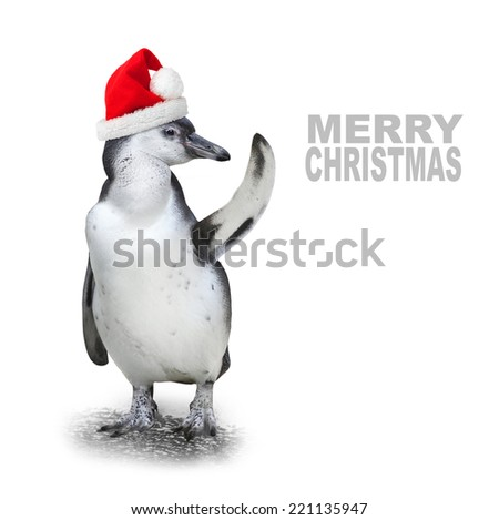 Funny penguin with santa's cap showing space for your text or picture. - stock photo