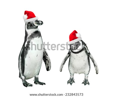 Funny penguins with santa's cap on white background. - stock photo