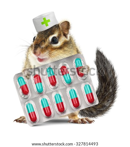Funny pet chipmunk hold pills, dressed veterinarian hat - stock photo