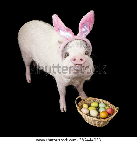 Funny photo of a pet pig wearing Easter BUnny ears with a basket of colorful eggs - stock photo