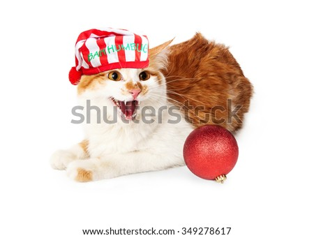 Funny photo of angry yellow and white cat hissing while wearing a Christmas night cap with the words Bah Humbug - stock photo