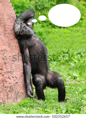 Funny picture of the ape with empty idea bubble for your text or image. - stock photo