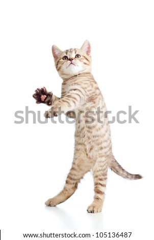 Funny playful cat is jumping. Isolated on white background - stock photo