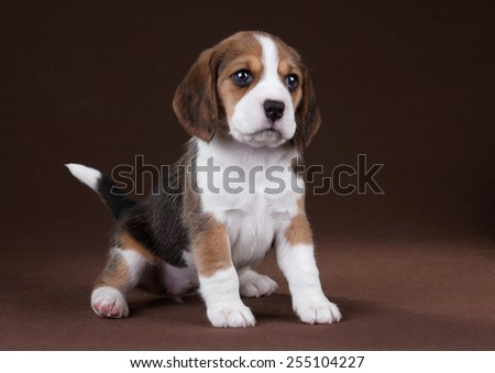 Funny playful puppy - stock photo